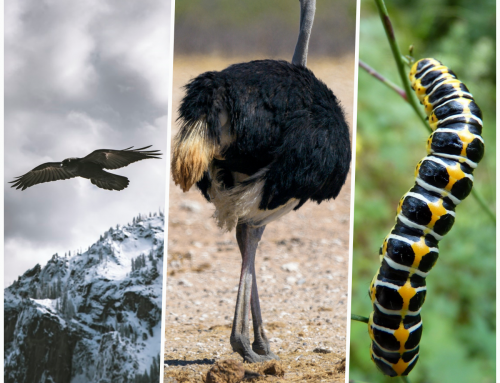 Digital Transformation: An eagle, a caterpillar or an ostrich?