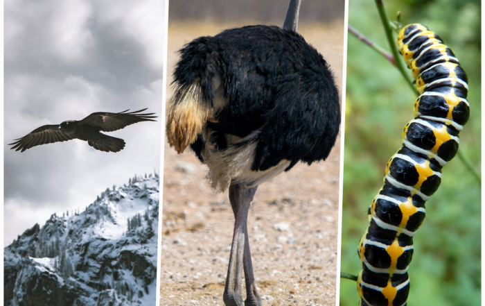 Eagle Ostrich Caterpillar & Digital Transformation