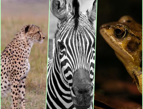 Digital Transformation: A cheetah, a zebra or a frog?