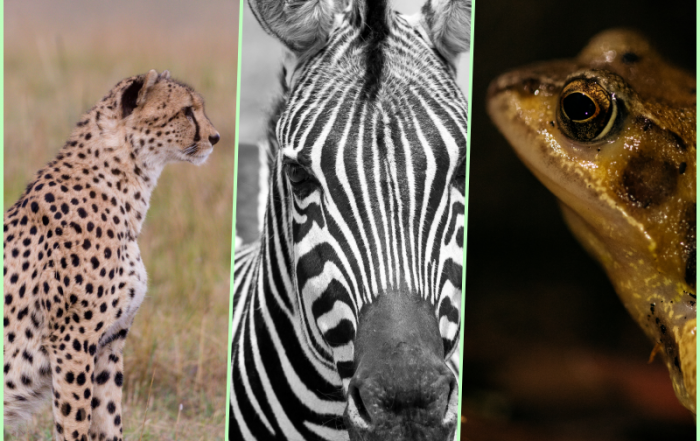 Cheetah Zebra Frog & Digital Transformation with ERP Software